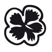 Blüte 1
